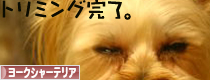 20090611mura