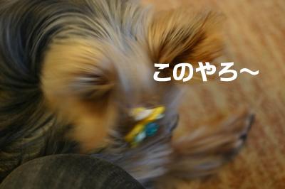 20080213_05